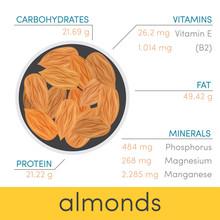 Almonds Vector Infographic