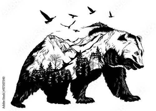 Photo  Hand drawn bear for your design, wildlife concept