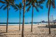 Palm trees in Copacabana beach Rio Brazil