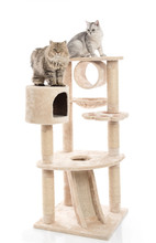 Cute Cat Lying On Cat Tower