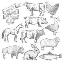 Farm Animals Set.