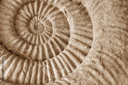 Cadres-photo bureau Spirale ammonite prehistoric fossil