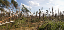 Forest Storm Damage In Poland