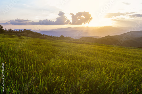 Terraced rice field at Ban Pa Bong Piang, Chiang Mai in Thailand.