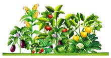 Fresh Vegetable Plants Growing...