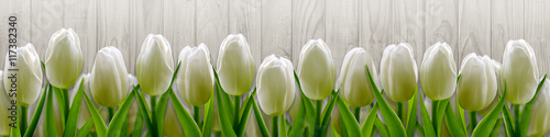 Foto op Plexiglas Tulp White tulips on background wooden fence
