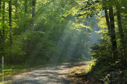 Papiers peints Foret brouillard Dirt Road through Forest of Beech Trees illuminated by Sunbeams through Fog