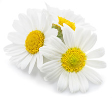 Chamomile Or Camomile Flowers.