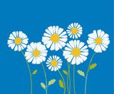 chamomile vector illustration. white daisy flower in decorative
