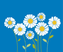 Chamomile Vector Illustration. White Daisy Flower In Decorative