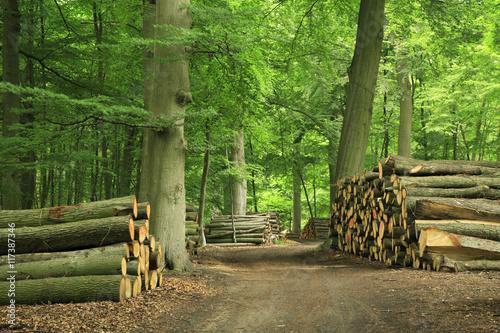 Fotobehang Bossen Piles of Lumber along Dirt Road through Green Forest