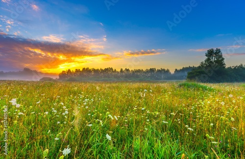 Foto op Plexiglas Weide, Moeras Calm and tranquil place with untouched wild meadow at sunrise