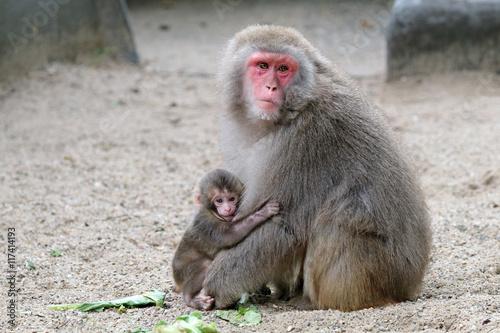 Foto op Canvas Eekhoorn Japanese monkey