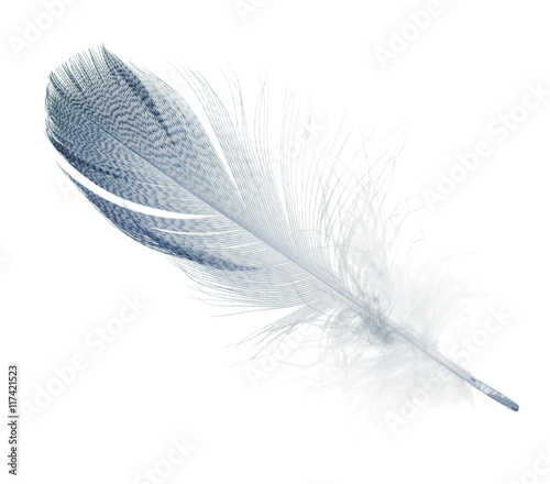 striped blue straight feather isolated on white
