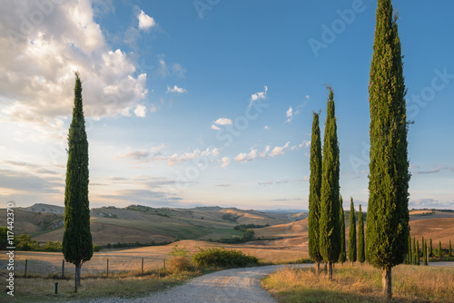 Beautiful picturesque view of the road and cypress trees. Canvas