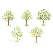 Broadleaf Tree Illustration