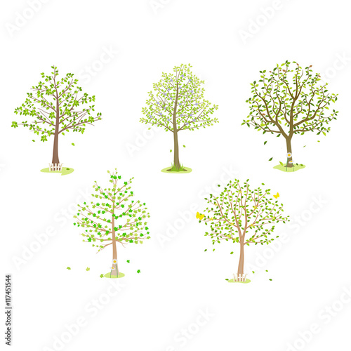 broadleaf tree illustration Fototapeta