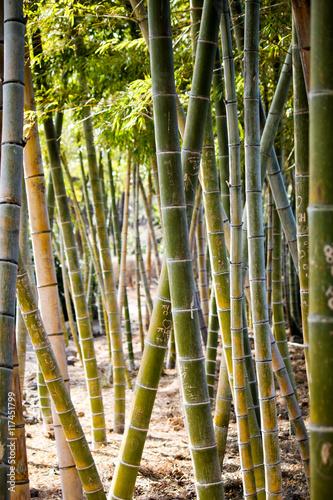 Poster Bamboe 낙서된 대나무 숲