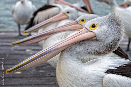Pelican close up portrait on the beach - 117452534