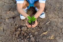 Boy Carry Little Seedling