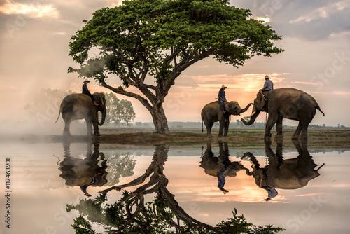 Trzy słonie pod drzewem