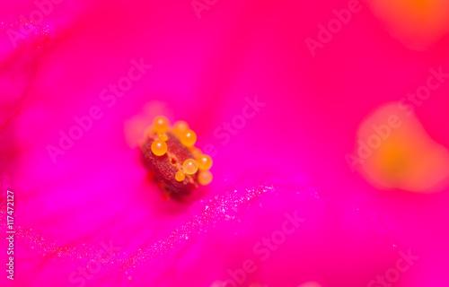 pollen in flower kpasnom