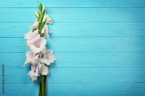 Fotografía Beautiful gladiolus flowers on color wooden background