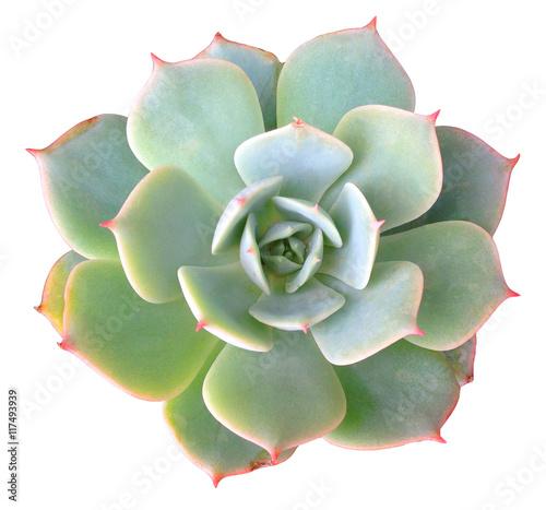 Spoed Foto op Canvas Cactus Succulent Clip Art