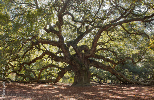 Angle Oak Tree – Located outside of Charleston of St. John Island