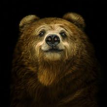 Smiling Bear On A Black Backgr...