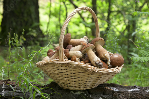 Fotografering  Mushrooms porcini  in the wicker basket on the green grass