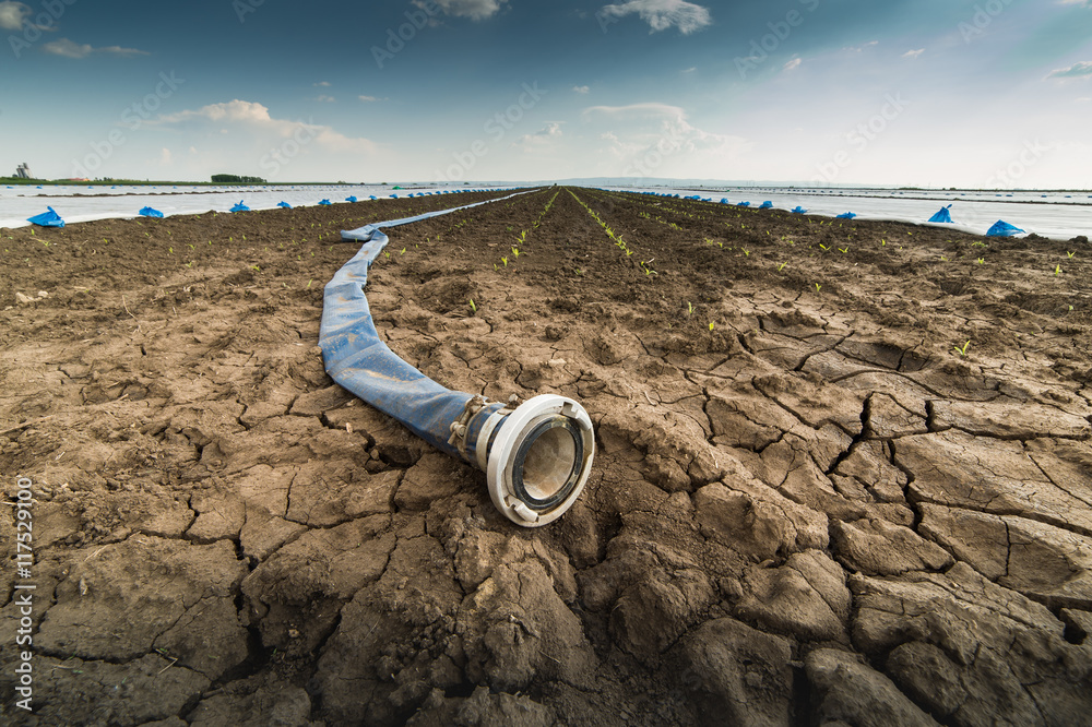 Fototapeta Dry land - drought - and hose for watering