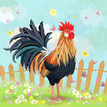 Lovely Rooster In Summer Rural Scenery