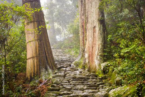 Fotografie, Obraz  Sacred Trail in Japan
