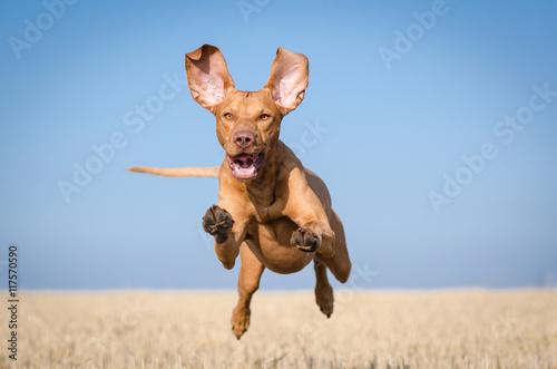 psiak-radosnie-skaczacy-na-spacerze-w-letni-poranek