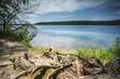 Umgestürzte Bäume am Rande eines Sees mit Spiegelung der schönen Wolken im Wasser