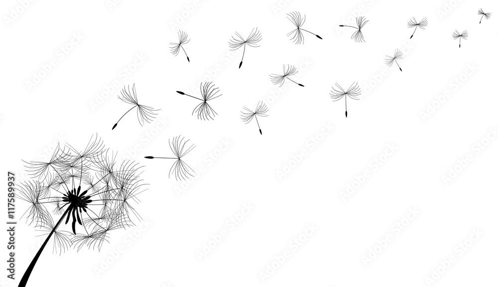 Fototapety, obrazy: Dandelion.Dandelion flower in black on a white background.