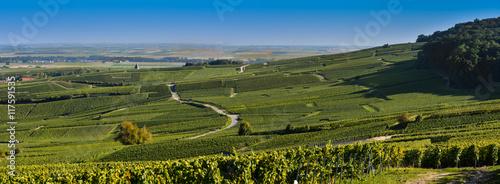 Fotografie, Obraz  Champagne vineyards in Marne department, France
