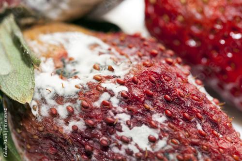 Fotografie, Obraz  Strawberry with mold