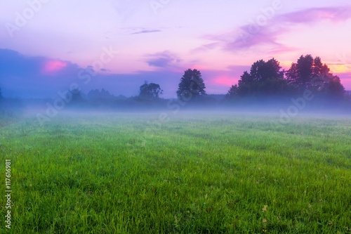 Foto op Aluminium Purper Beautiful morning on foggy meadow