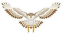 鷹 飛ぶ 正面 白バック