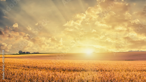 Leinwand Poster Golden wheat field