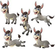 Donkey Cartoon Set Collection
