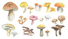 Watercolor Mushrooms Set. Heal...