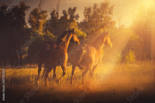Foto op Canvas Paarden Three brown horse run on the sunset background