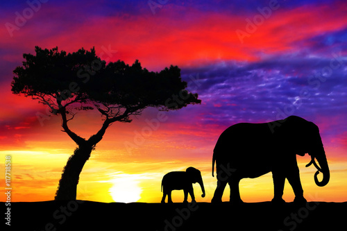Fototapety, obrazy: Silhouettes of mother and  baby elephants at sunset in Africa