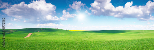 Photo sur Aluminium Herbe Green field under blue sky