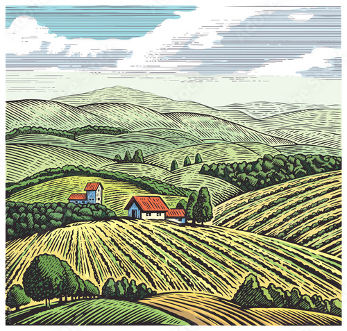 Rural landscape in graphic style, hand drawn and converted to vector Illustration.