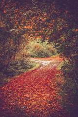 Obraz Autumn leaves on a forest trail