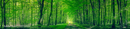 Garden Poster Forest Panorama scenery with a road in a forest